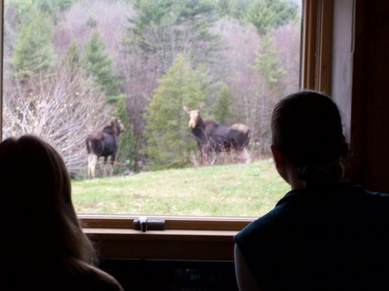 Dummerston, Vermont. April 4, 2009.